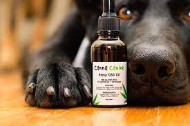 How To Shop For CBD Oil For Dogs And Make The Most From It